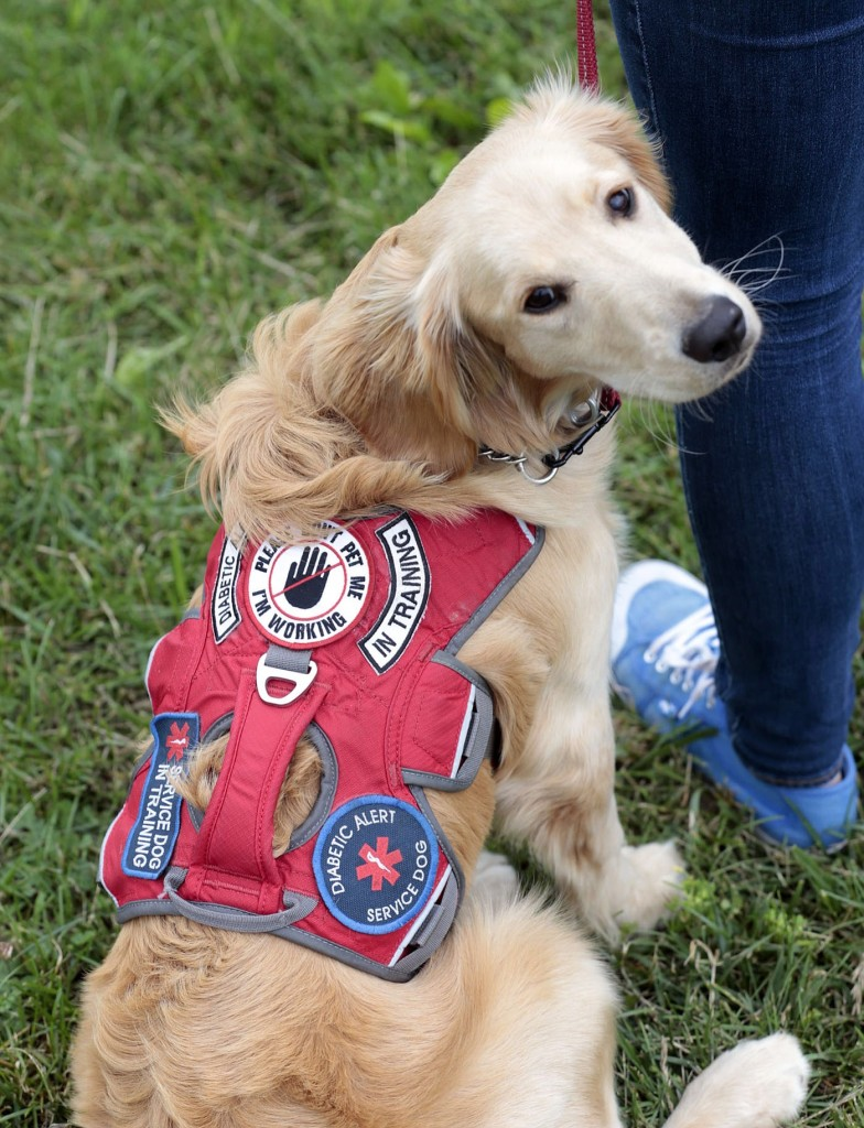 Can A Type  Diabetic Own A Service Dog