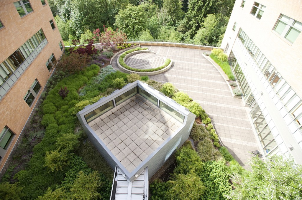 Growing an improved healing garden   The Columbian