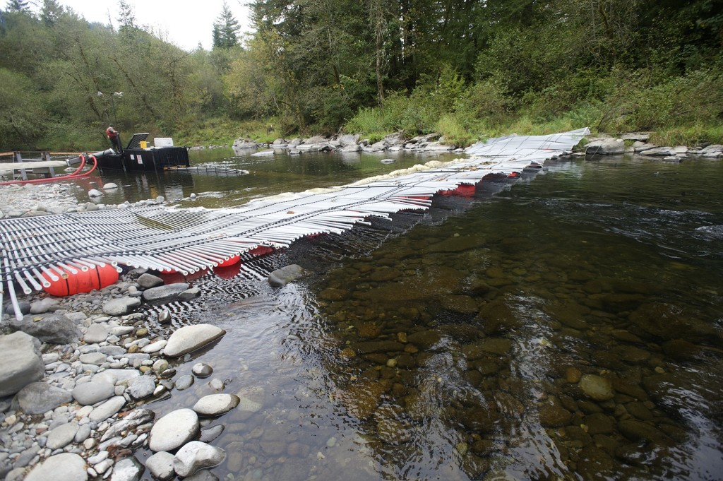 Salmon slip slide on wild ride in cannon the columbian for Cannon fish company