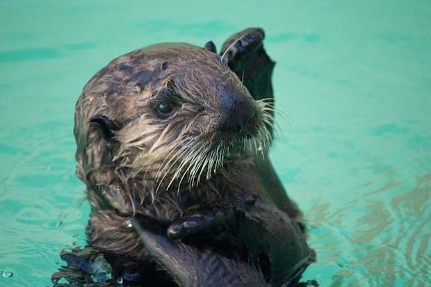 Go, Tuesday: Oregon Zoo, 'Guys and Dolls' | The Columbian