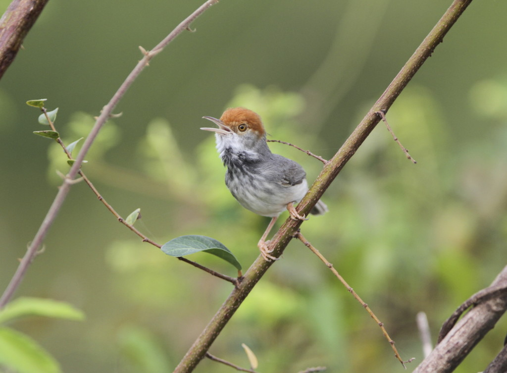 Dozens of new flora fauna species in