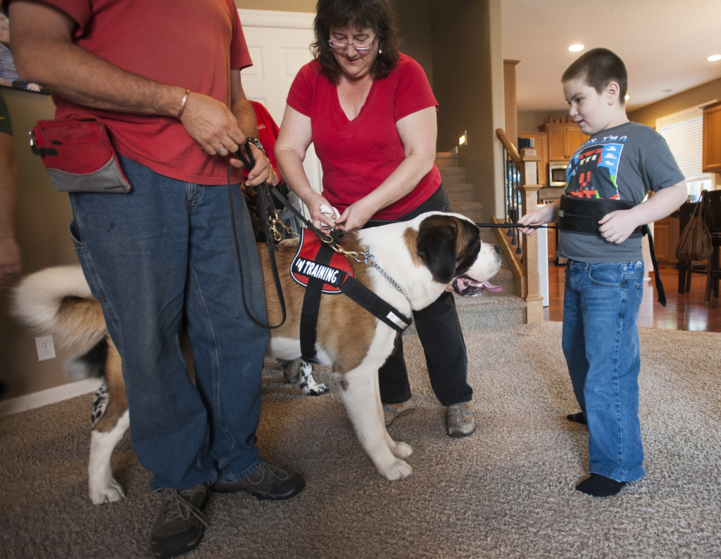 Kirsten Becker Executive Director Of Autism Anchoring Dogs Center Attaches A Tether Connecting Saint Bernard Andy To 9 Year Old Deklan Montes