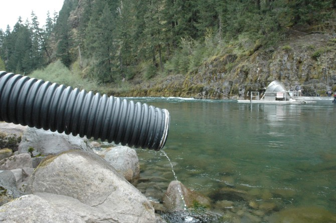 Weak run to slow upper n lewis coho restoration the for Bonneville dam fish counts
