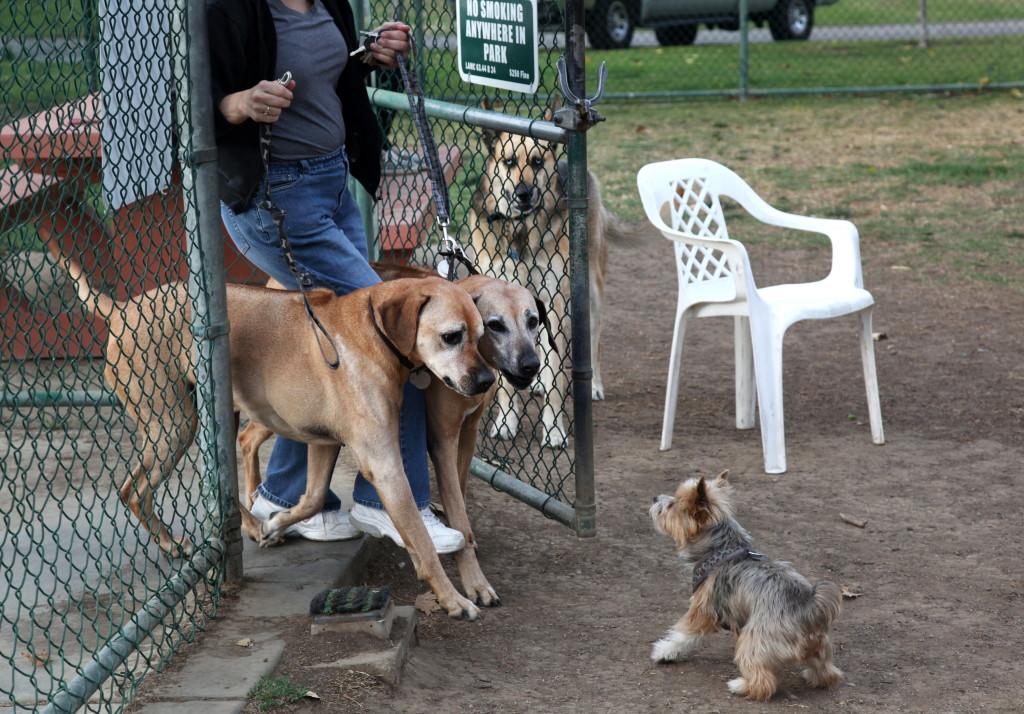 Dogs Spiel