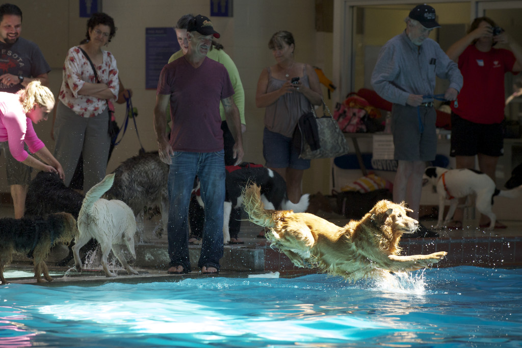 Marshall Pool Goes To The Dogs The Columbian