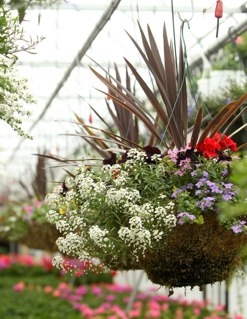 Beautiful Hanging Baskets Start With Smart Planting The Columbian