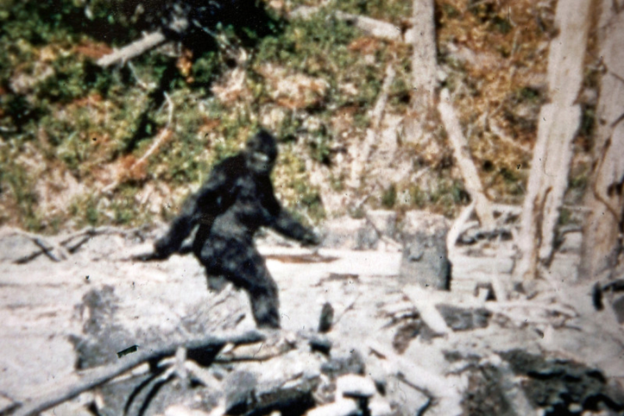 Bigfoot belongs and its habitat needs protection the for Patterson woods