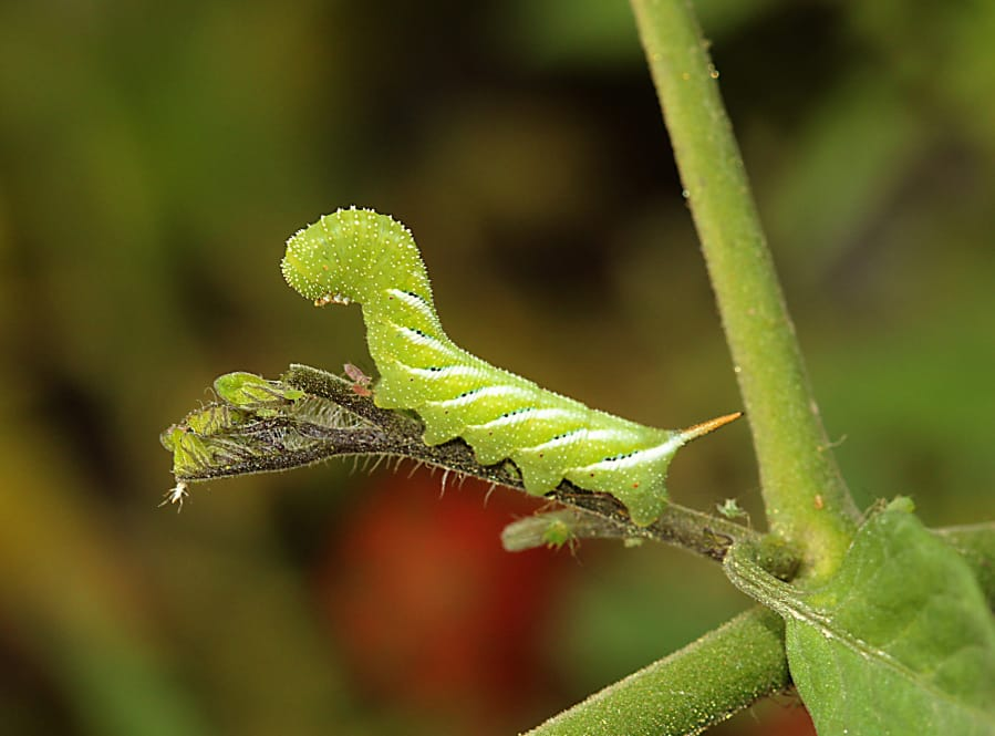 The good and bad of garden insects   The Columbian