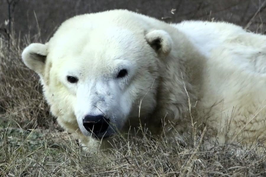 Polar Maverik/02 iUXf6I1