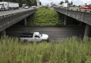 Traffic moves along Northeast 179th Street and on Interstate 5. The interchange there is slated for