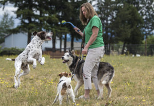 Newton, from left, Diesel and Niko wait for a highly coveted item, a ball, to be thrown by Cindy Rot