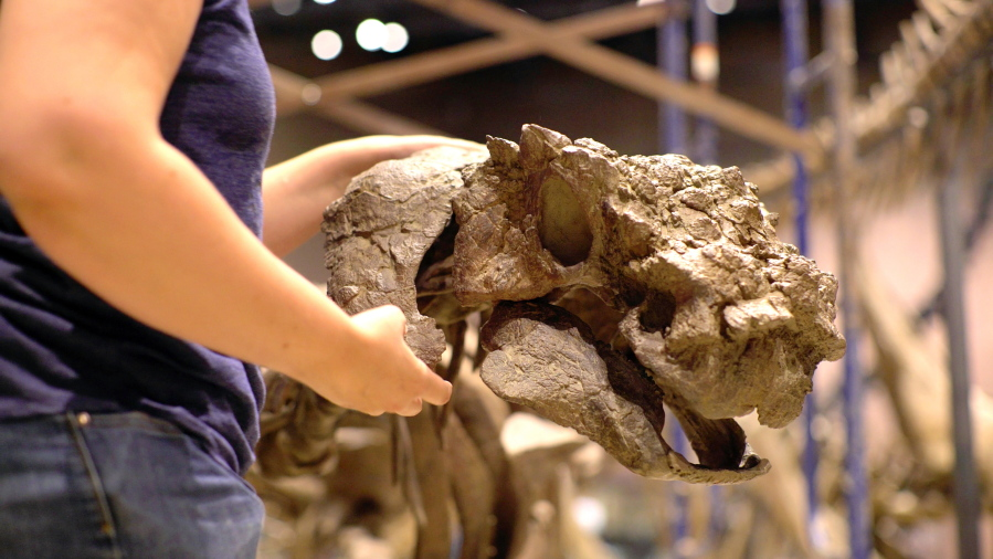 New spiky-skulled dinosaur lived on a lost continent