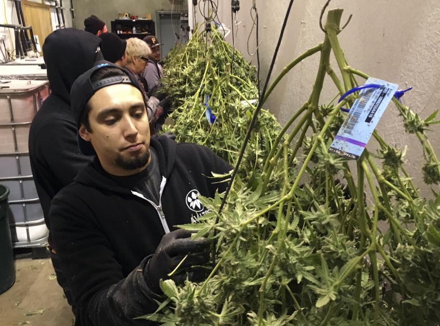 Report from NY health officials calls for marijuana legalization