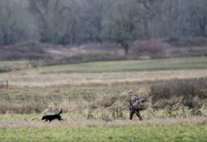 A hunter and his dog move about while waterfowl hunting at the Shillapoo Wildlife Area in the Vancou