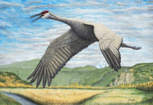 """Wilson Cady's painting, """"Sandhill Crane Over Steigerwald,"""" was selected as the poster image for the"""