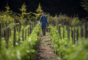 Lauren Ruhe of Vancouver works in August at April Joy Farm in Ridgefield. The 26-year-old started an