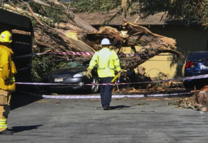Authorities access the damage after a woman was killed after a large eucalyptus tree toppled and sma