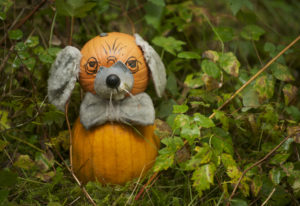 A pumpkin mouse peeks out from behind foliage at Pomeroy Farm's famous Pumpkin Lane, open Saturdays