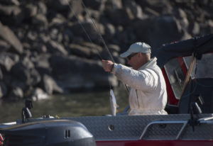 The pikeminnow bounty program allows fishermen to have fun, catch fish, earn money, and save salmon