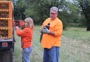 Julie Rouzee and Randy Dalton release pheasants at the Shillapoo Wildlife Area as volunteers with th