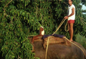 Eric Dinerstein stands on an elephant in Nepal in the mid-1980s. Dinerstein, who worked for 25 years